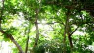 sunny green trees video