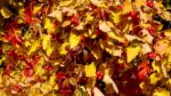 Sunny hawthorn video