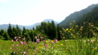 Sunny mountain landscape in the Bavarian Alps, Germany video