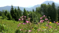 Sunny mountain landscape in the Bavarian Alps video