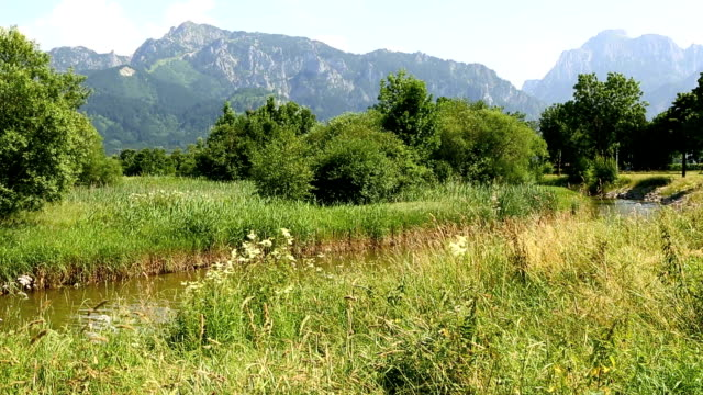 Sunny mountain landscape in the Bavarian Alps with flowers in foreground video