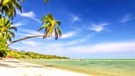 Sunny palm tree video