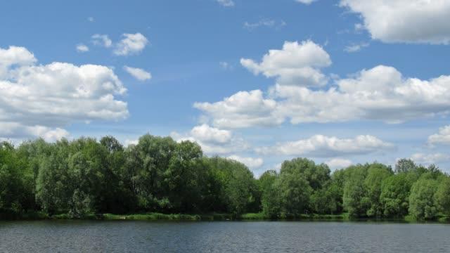 Sunny pond, time lapse video