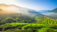 4K : Sunrise and mist on mountain view at the north of thailand video