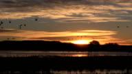 Sunrise at Bosque Del Apache NWR New Mexico video