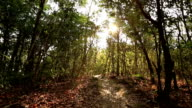sunrise at forest  hiking  trail video