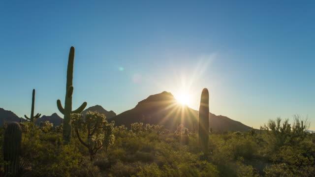 Sunrise at Saguaro National Monument video
