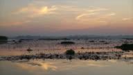 sunrise at the sea of red lotus at Nong Han Lake national park video