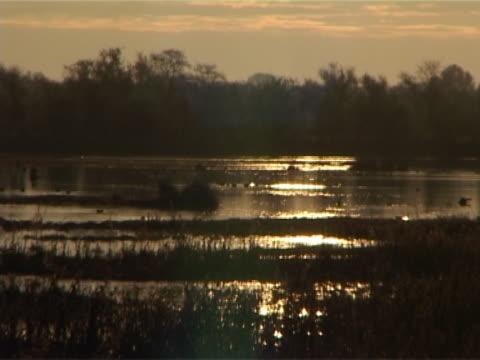 sunrise birds video