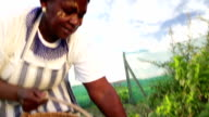 Sunrise close up African business woman harvesting herbs video