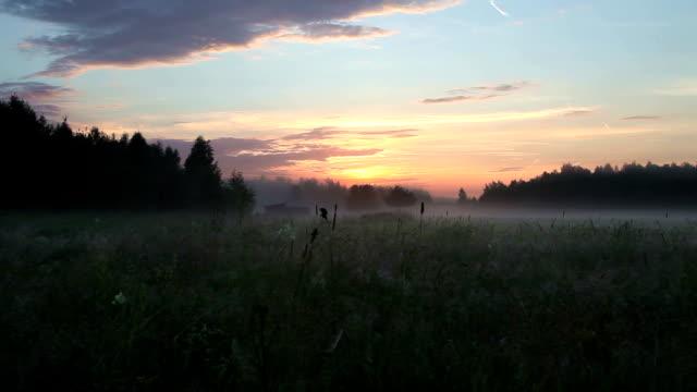 Sunrise in a field video