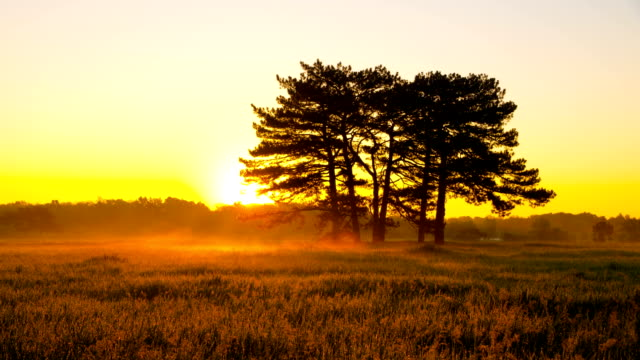 Sunrise in Green Meadow with Six Pines video