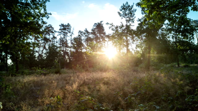 Sunrise in the forest early in the morning. Time lapse. video