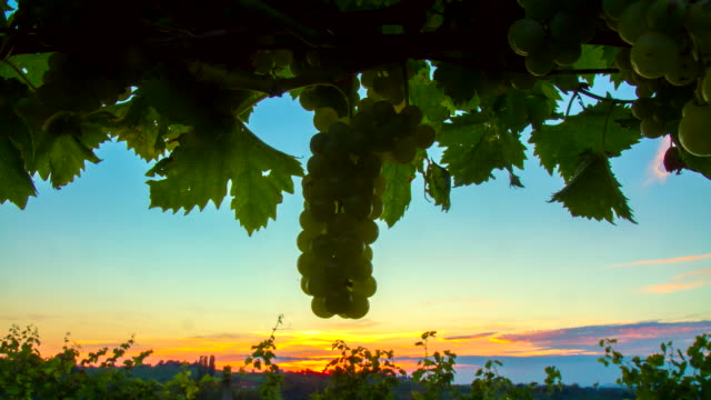 T/L Sunrise In The Vineyard video