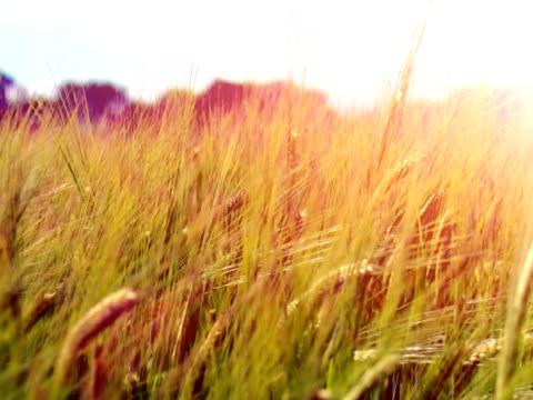 Sunrise over fields video
