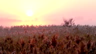 Sunrise over reed in a field autumn. Time lapse video