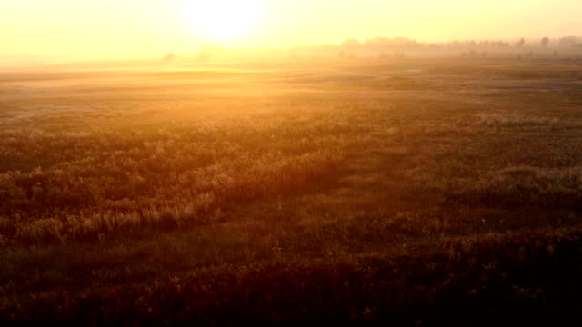 Sunrise over the meadow in a foggy autumn day. Aerial video