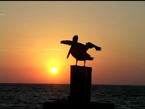 Sunrise Pelican 4A video
