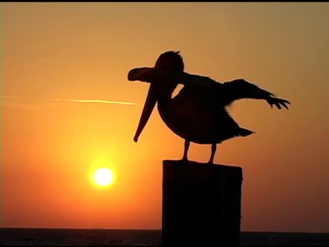 Sunrise Pelican 4b video