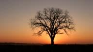 Sunrise tree. video