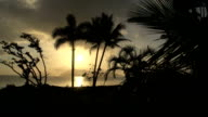 Sunrise with palm trees and Dunk Island on the background in mission beach, Queensland, Australia video