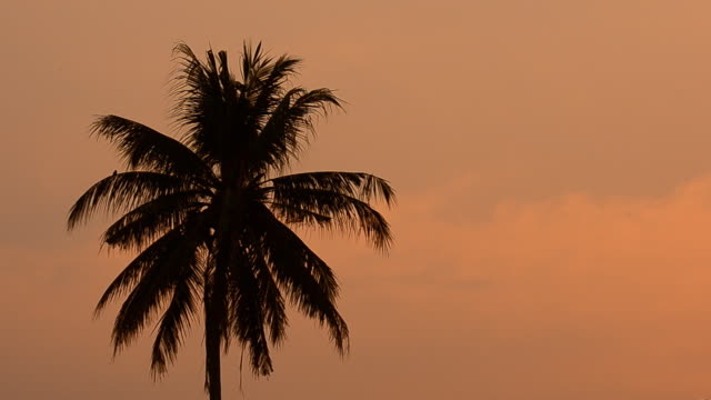 Sunset and coconut tree video