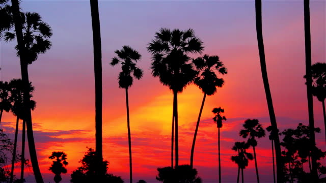Sunset and palm tree. video