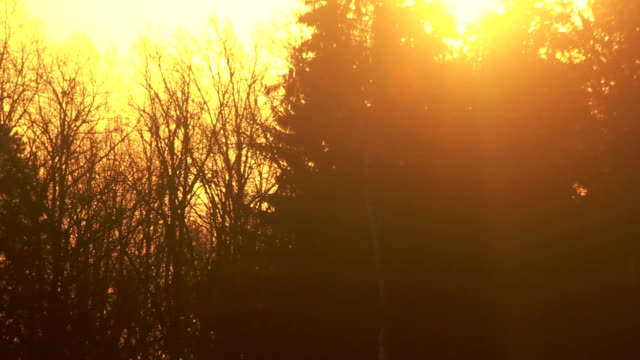 Sunset at forest. Sun rays shine through forest. Evening sun beams at forest video