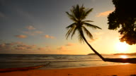Sunset Beach with Palm Tree on the Island video