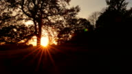 Sunset behind a Large Oak video