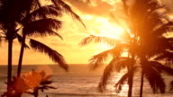 Sunset behind palm trees video