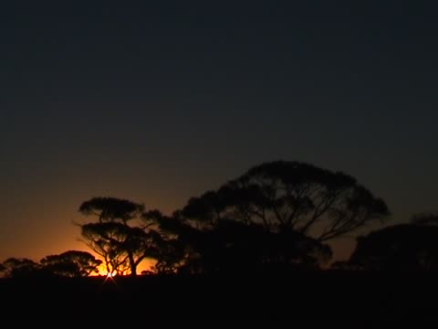 Sunset behind  trees video