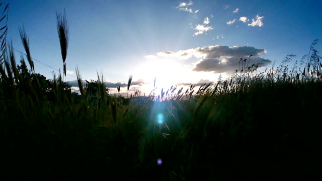 sunset grass slow motion video