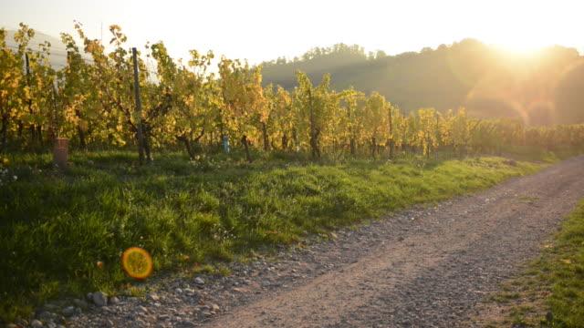 Sunset in Alsace Vineyard France video
