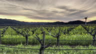 Sunset in Napa Valley, California video