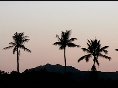 Sunset in the Palm Trees video