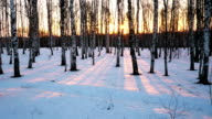 Sunset in the winter forest video