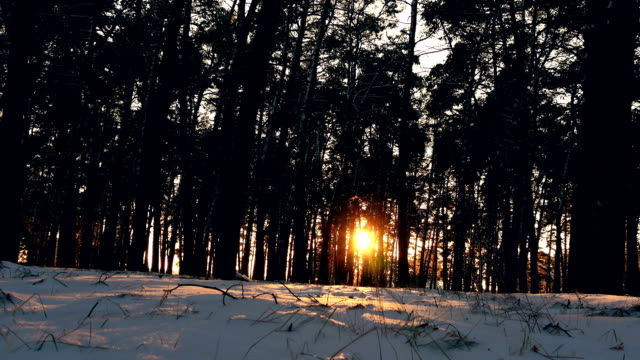 sunset in the winter frosty Christmas forest video