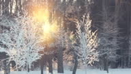 Sunset in winter forest. Sun rays shine through winter trees. Winter sun set video