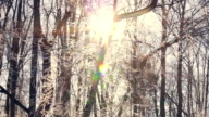 Sunset in winter forest. Sun shine through tree branches covered with snow video