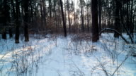 Sunset in winter forest. Time Lapse. video