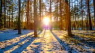 sunset in winter forest,  time-lapse video