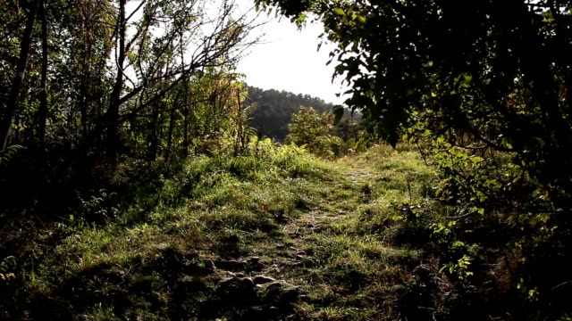 Sunset lights on a small path video