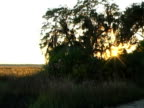 sunset marsh grass video