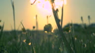 Sunset Meadow video
