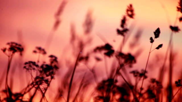 Sunset on a meadow video