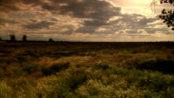 Sunset on a swaying grassy field video