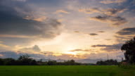 Sunset on green paddy rice field Time lapse. video