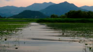 Sunset on Lake Skadar. Plantation of water lilies video