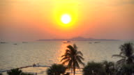 Sunset on the beach with palm tree video